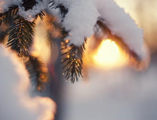 5 Tipps gegen eingefrorene Tonnen