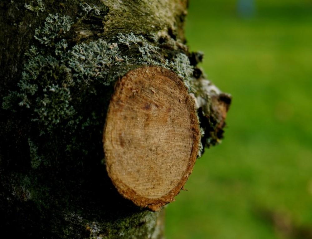 Sammelplätze für Baum- und Strauchschnitt