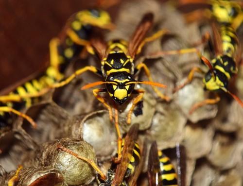 Vorsicht bei Wespen in Glascontainern