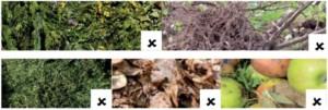 Das Bild zeigt Laub- und Hölzer, die nicht als Baum- und Strauchschnitt zählen
