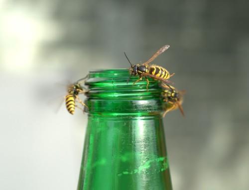 Bei Wespen in Glascontainern ist Vorsicht geboten!