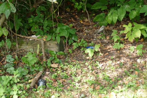 Verschiedene Arten Müll liegen in einem Gebüsch.
